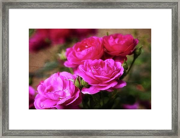 Your Precious Love Framed Print