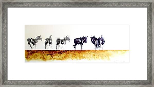 Zebra And Wildebeest Framed Print