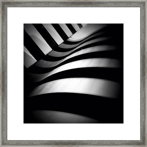 Zebra City - Concrete Jungle Framed Print