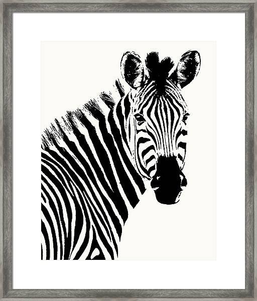 Zebra In Graphic Black And White Framed Print