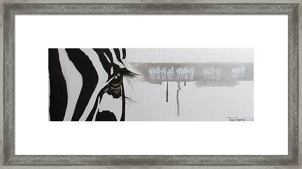 Zebra Tears Framed Print