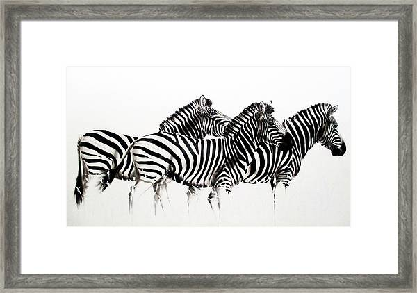Zebras - Black And White Framed Print
