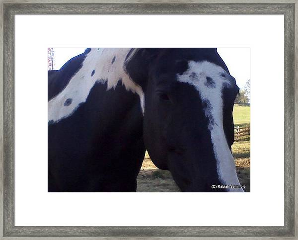 Zeebeeng A Study In Black And White Framed Print