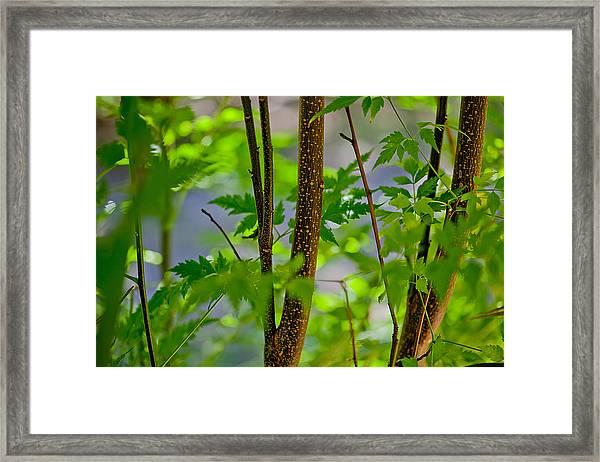 Zen Forest Framed Print