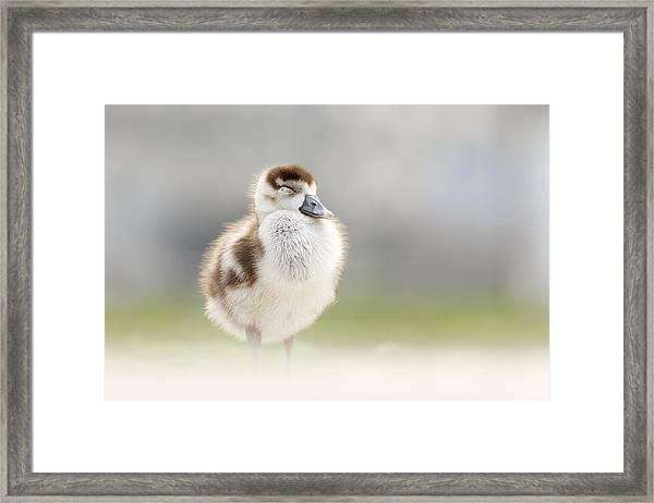 Zen Gosling Framed Print