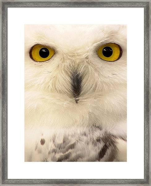 - Framed Print