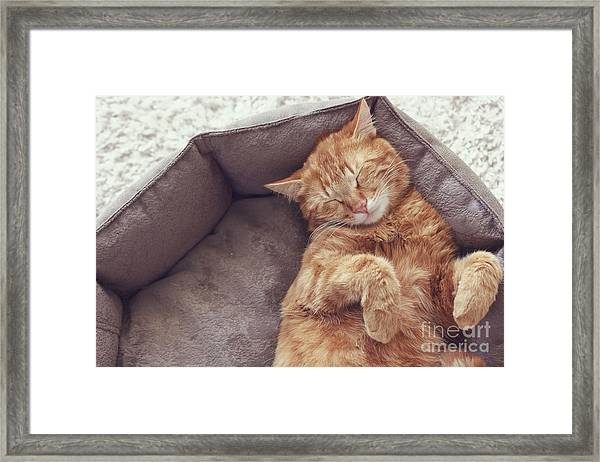 A Ginger Cat Sleeps In His Soft Cozy Framed Print by Alena Ozerova