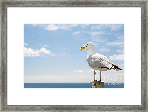Birds And Wildlife Concept - Seagull On Framed Print