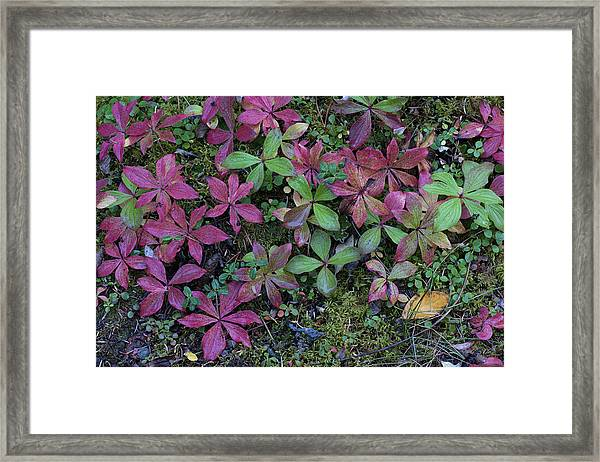 Boreal Forest, Lichen, Moss, Mushroom Framed Print by Gerry Reynolds