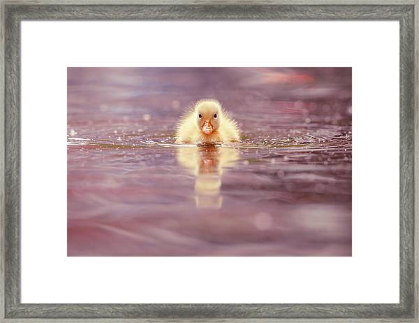 Cute Overload Series - Yellow Duckling II Framed Print