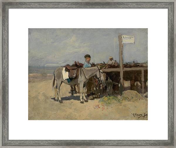 Donkey Stand On The Beach At Scheveningen Framed Print