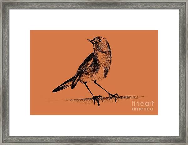 Drawing Of Hummingbird. Illustration Framed Print