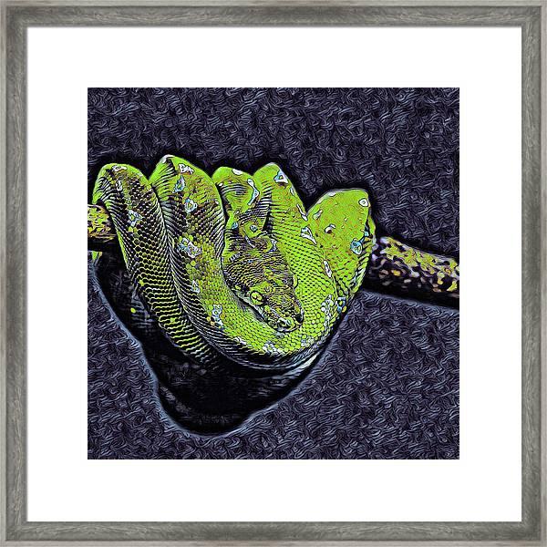 Emerald Tree Boa Framed Print