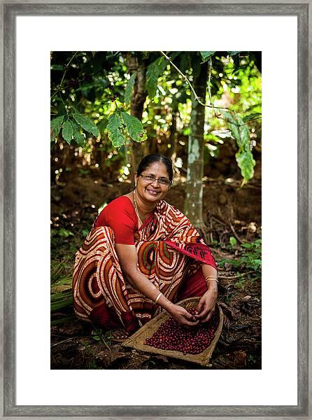 Female Coffee Farmer Harvesting Coffee Framed Print