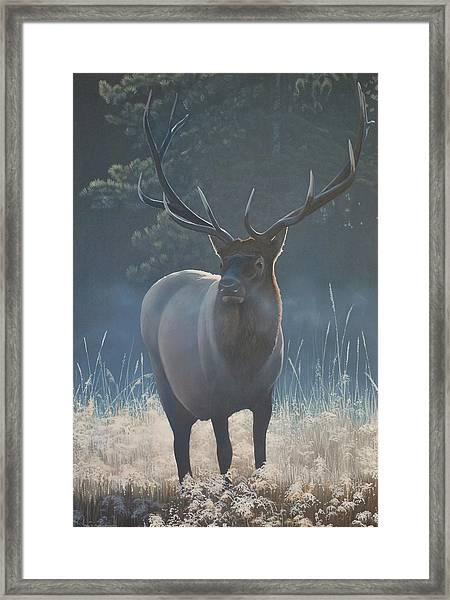 First Light - Bull Elk Framed Print