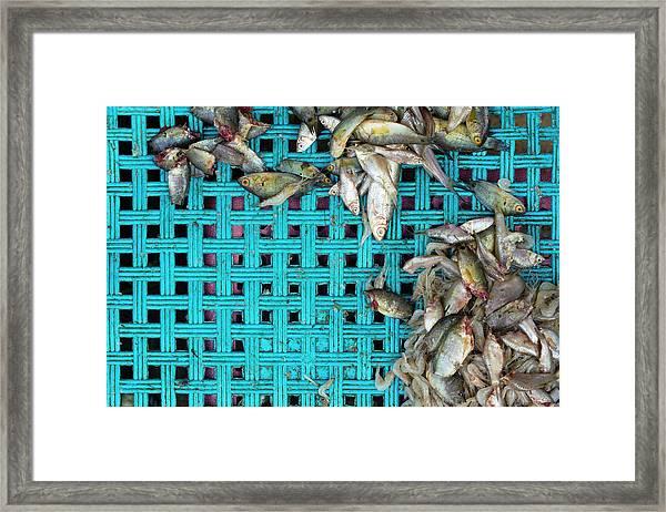 Fish At The Market Framed Print