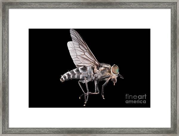 Fly Macro Insect Nature Animal Eye Bug Framed Print