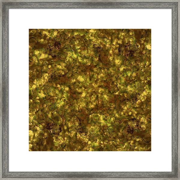 Forest Canopy 2 Framed Print