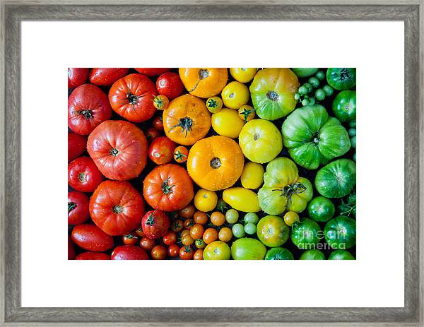 Fresh Heirloom Tomatoes Background Framed Print
