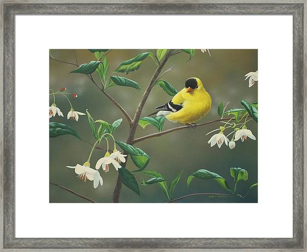 Goldfinch And Snowbells Framed Print