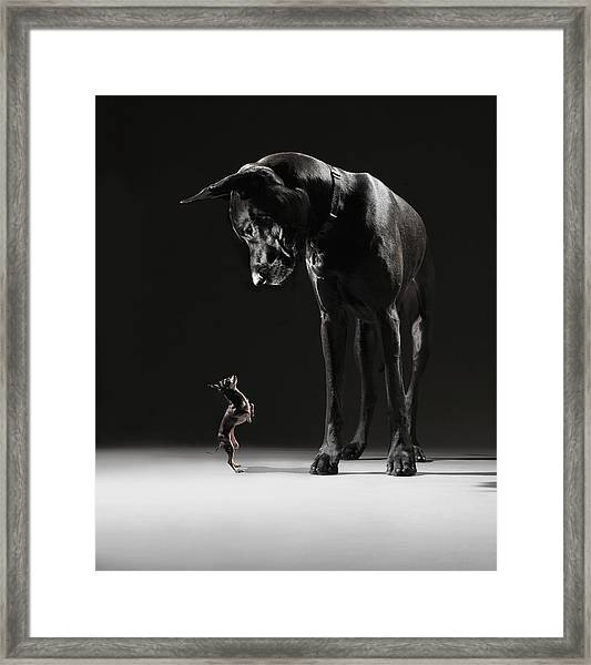 Great Dane And Chihuahua Staring At One Framed Print by Lauren Burke