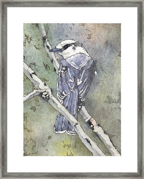 Grey Jay Framed Print