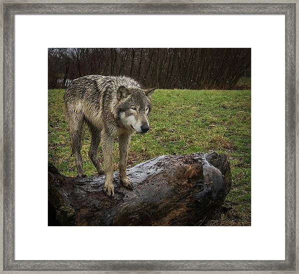 Hangin On The Log Framed Print