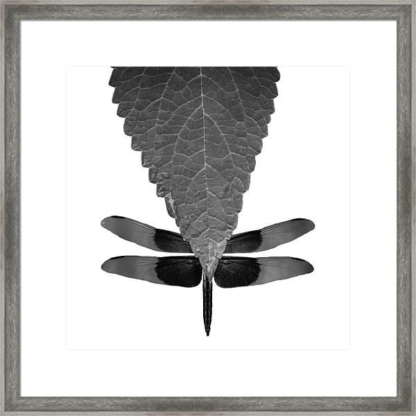 Hiding Dragons Framed Print