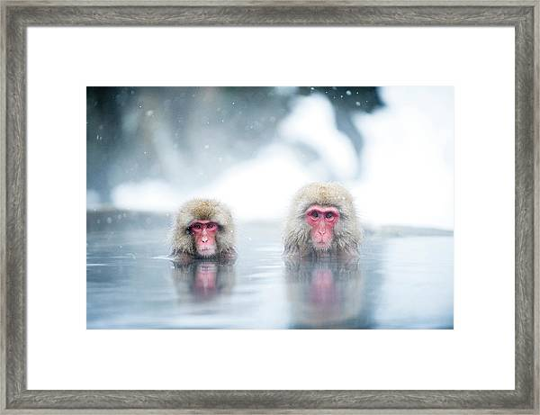 Japanese Macaques Framed Print