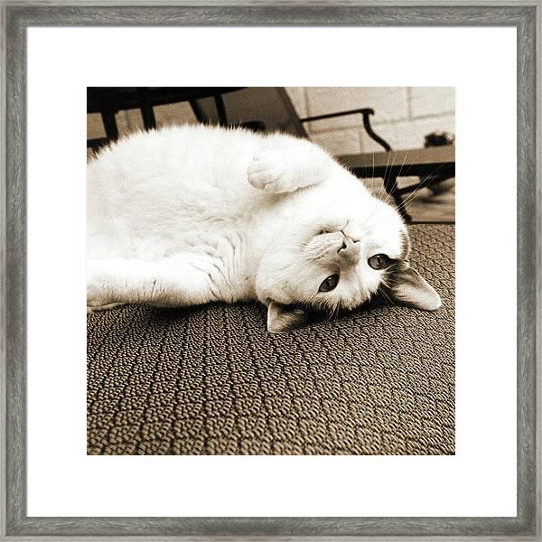 Kitty II Crop Framed Print by Jim Dratfield