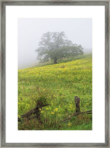 Lone Tree Hill - Blue Ridge Parkway Framed Print