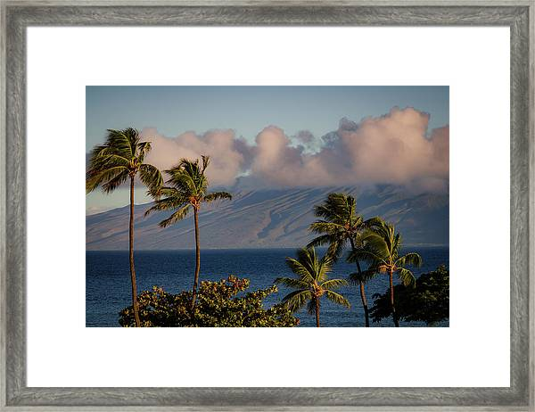 Maui Palms Framed Print
