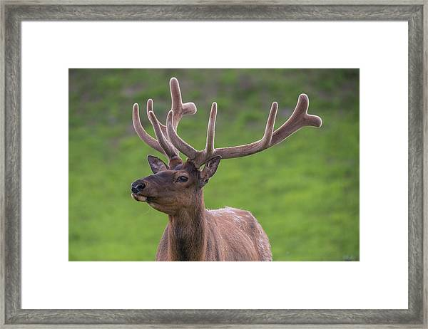 Framed Print featuring the photograph ME1 by Joshua Able's Wildlife