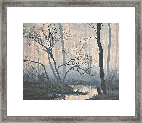 Misty Hideaway - Wood Duck Framed Print