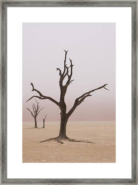 Namibia Fog Shrouds The Dead Acacia Framed Print by Brenda Tharp