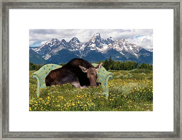 Nap Time In The Tetons Framed Print
