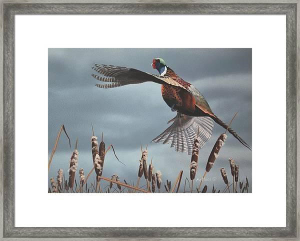 Out Of The Cattails Framed Print