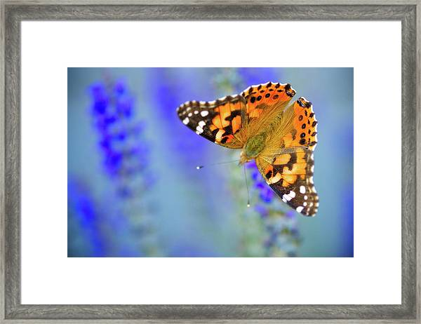 Framed Print featuring the photograph Painted Lady Butterfly by Nicole Young
