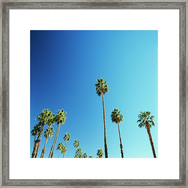 Palm Trees Against Blue Sky Framed Print