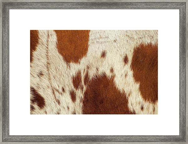 Framed Print featuring the photograph Pattern Of A Longhorn Bull Cowhide. by Rob D Imagery