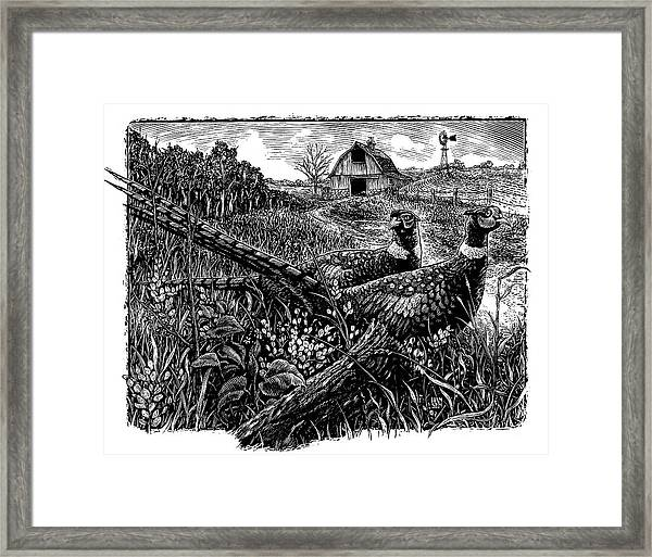 Framed Print featuring the drawing Pheasants by Clint Hansen