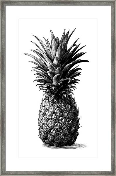 Framed Print featuring the drawing Pineapple by Clint Hansen
