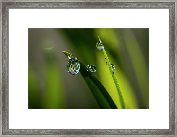 Rain Drops On Grass Framed Print