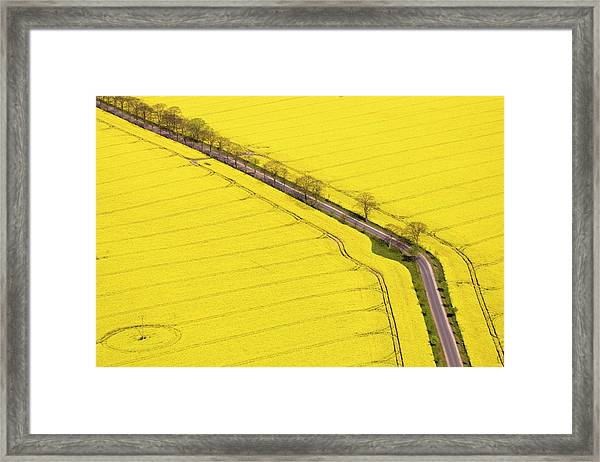 Rape Field Photographed From The Air Framed Print by Willi Rolfes