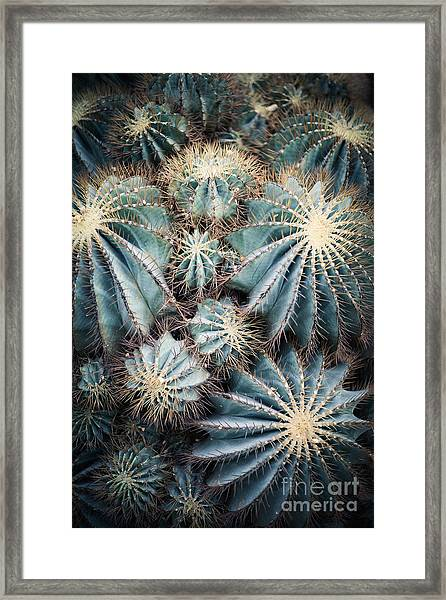 Rustic Macro Shot Of Cactus - Tropical Framed Print