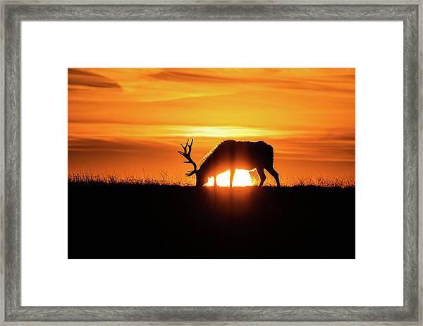 Sunrise Elk Framed Print