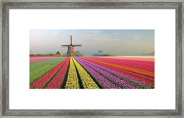Tulips And Windmill Framed Print