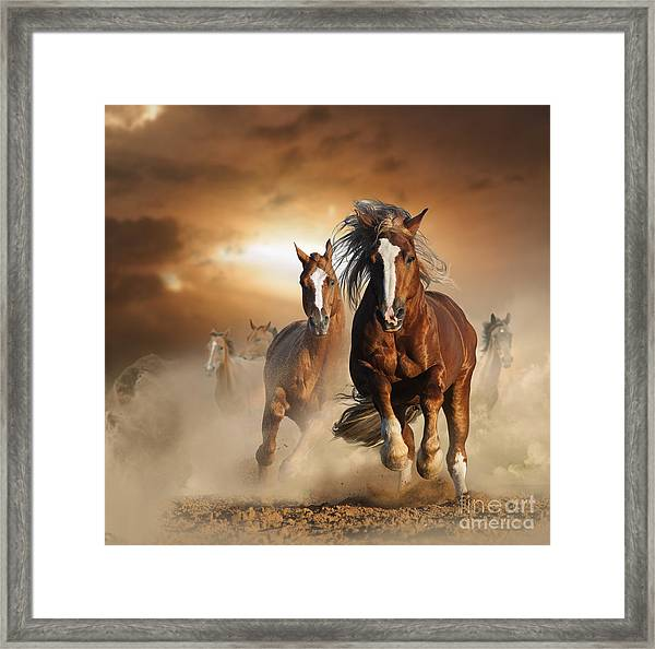 Two Wild Chestnut Horses Running Framed Print
