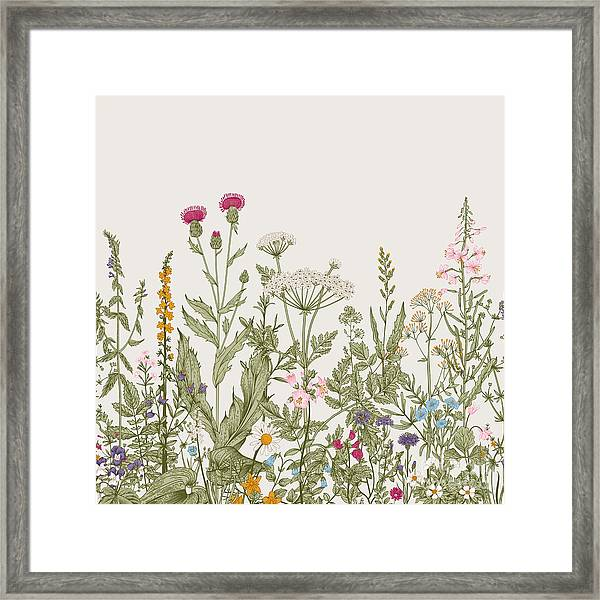Vector Seamless Floral Border. Herbs Framed Print