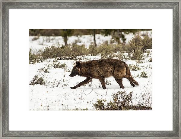 W10 Framed Print